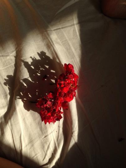 http://sophiamorenobunge.com/files/gimgs/1_geranium-nap-prettydeads-experiments.jpg