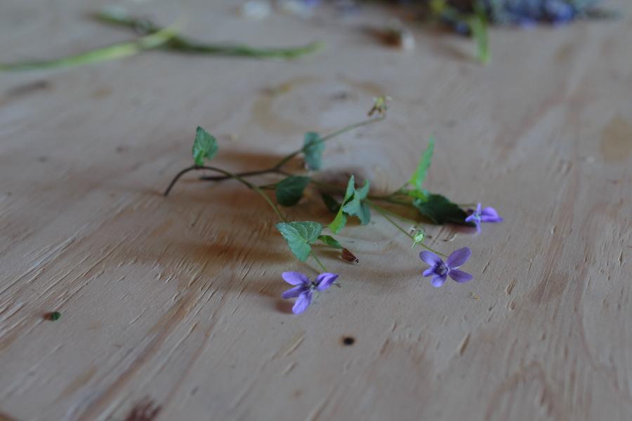 http://sophiamorenobunge.com/files/gimgs/28_img1405-wood-violet-viola-odorata-2.jpg