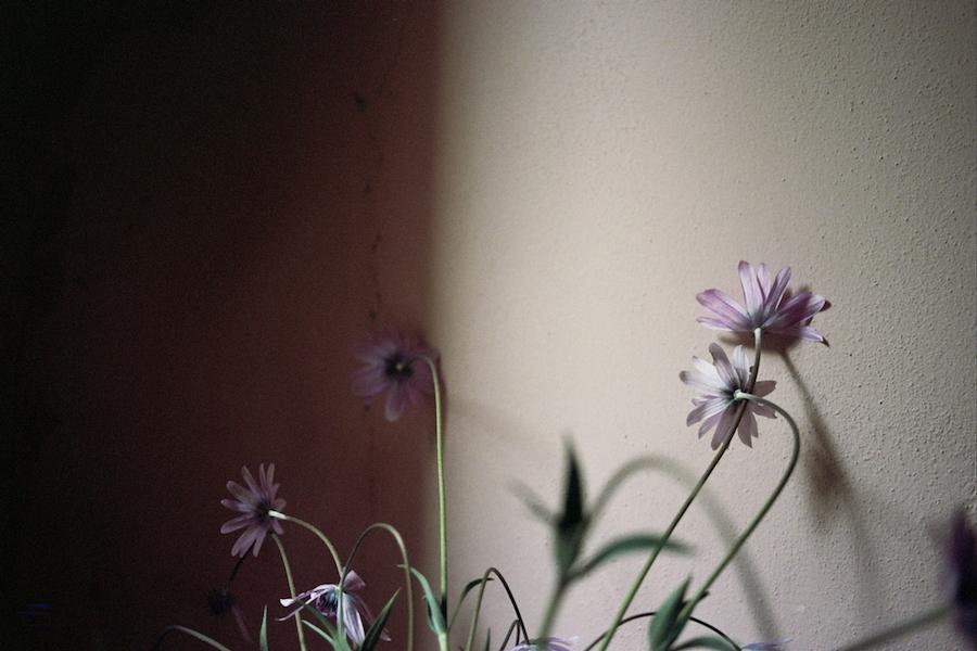 http://sophiamorenobunge.com/files/gimgs/28_sophia-moreno-bunge-villa-lena-flower-face.jpg