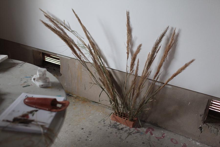 http://sophiamorenobunge.com/files/gimgs/28_sophia-moreno-bunge-villa-lena-pampas-grass-n-brick.jpg
